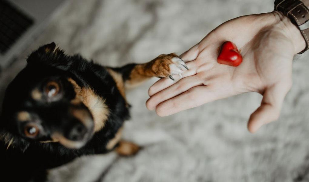 Geschenke-für-Tierliebhaber